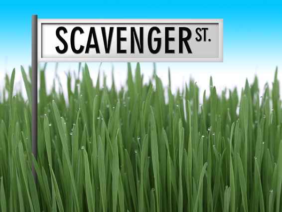scavenger-st